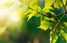 Environmental Blog Header
